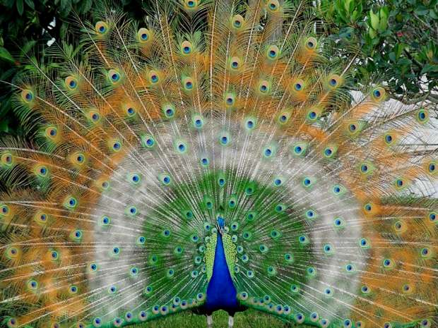 The Most Beautiful National Bird In The Worldinformationspictures